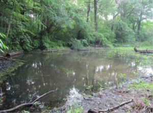 Vernal pool after remediation