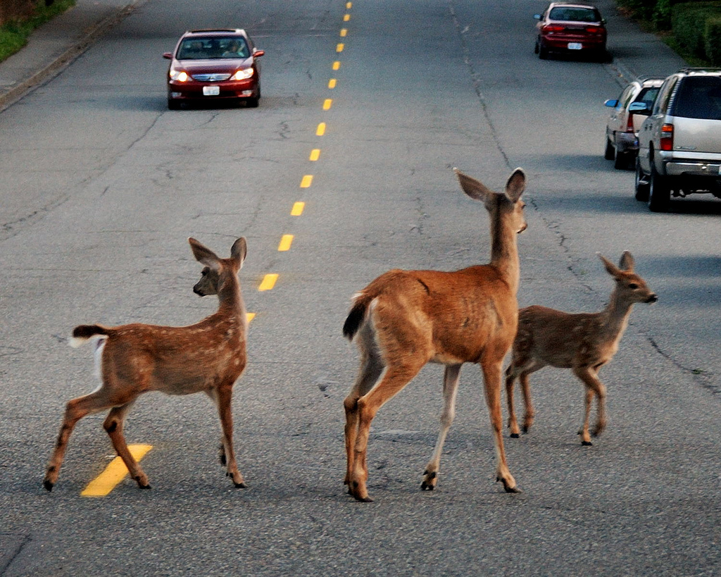 Connecting For Wildlife Improving Roads For Motorist