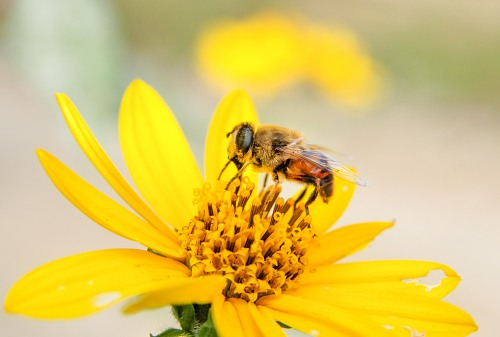 What's All the Buzz About? - Berkshire Environmental ...